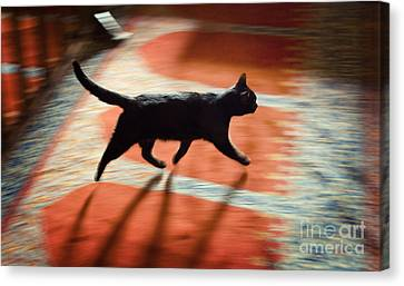 Canvas Print featuring the photograph Mosque Cat by Michel Verhoef