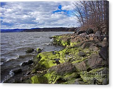 Canvas Print featuring the photograph Moss Along The Hudson River by Rafael Quirindongo