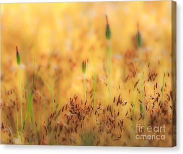 Moss And Flowers - Greensboro North Carolina Canvas Print by Dan Carmichael
