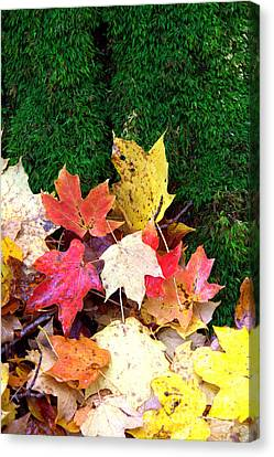 Canvas Print featuring the photograph Moss And Leaves by Jim McCain