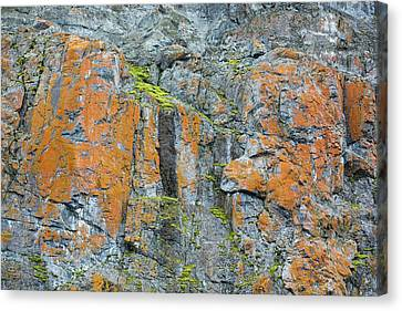 Green Lichen Canvas Print - Moss And Lichen by Ashley Cooper