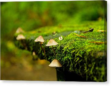 Moss Close-up Canvas Print by Kunal Mehra
