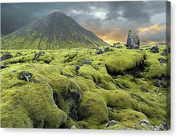 Moss-covered Lava Field Canvas Print by Tony Craddock