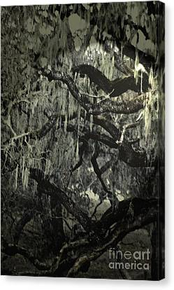 Canvas Print featuring the photograph Moss Covered Oak by Gary Brandes