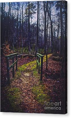 Moss Covered Path Canvas Print by Joan McCool