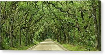 Moss Covered Trees On Botany Bay Road  Edisto Island Sc Canvas Print