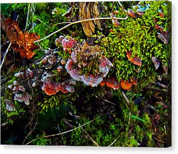 Moss Mushrooms And Knocks Canvas Print by Steve Battle