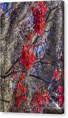 Moss On The Red Tree Canvas Print