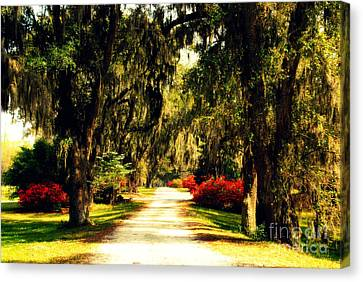 Moss On The Trees At Monks Corner In Charleston Canvas Print by Susanne Van Hulst