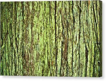 Moss On Tree Bark Canvas Print