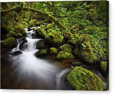 Mossy Arch Cascade Canvas Print by Darren  White