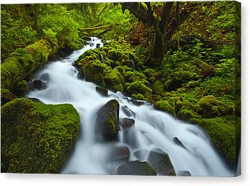 Mossy Creek Cascade Canvas Print by Darren  White