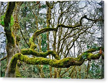 Canvas Print featuring the photograph Mossy Green by Kevin Munro