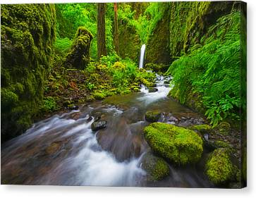 Mossy Grotto  Canvas Print