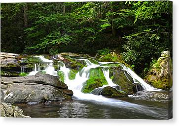 Mossy Mountain Falls Canvas Print by Frozen in Time Fine Art Photography