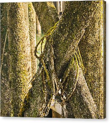 Mossy Pier Canvas Print by Ernest Puglisi