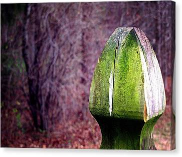 Canvas Print featuring the photograph Mossy Post by Greg Simmons