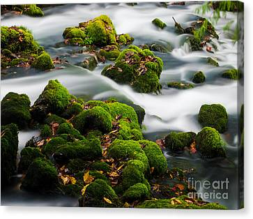 Mossy Spring Canvas Print by Shannon Beck-Coatney