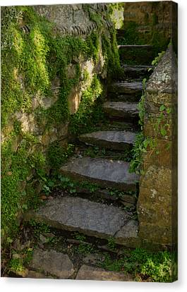 Mossy Steps Canvas Print by Carla Parris