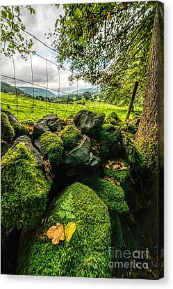 Mossy Wall Canvas Print by Adrian Evans