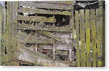 Canvas Print featuring the photograph Mossy Wood by Lew Davis