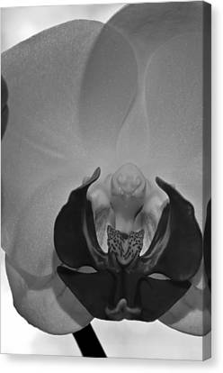 Canvas Print featuring the photograph Moth Orchid Bw by Ron White