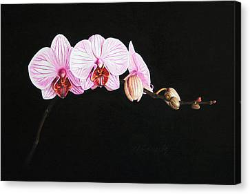 Moth Orchid Canvas Print by Marna Edwards Flavell