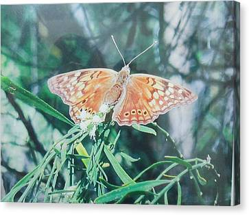 Moth Canvas Print by Rosalie Klidies