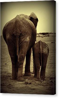 Mother And Baby Elephant In Black And White Canvas Print by Amanda Stadther
