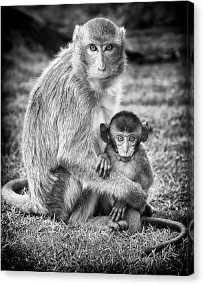Mother And Baby Monkey Black And White Canvas Print by Adam Romanowicz