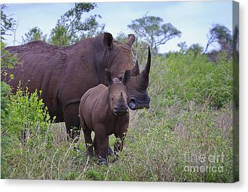 Mother And Baby Rhino Canvas Print