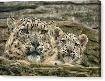 Canvas Print featuring the photograph Mother And Cub by Chris Boulton