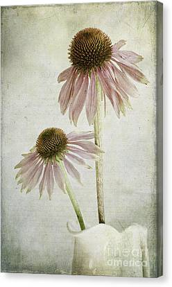 Coneflower Canvas Print - Mother And Daughter by Marion Galt
