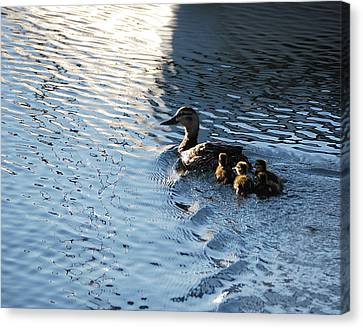 Mother Duck With Babies Canandaigua Lake 2008 Canvas Print