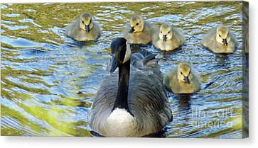 Mother Goose And Brood Canvas Print by Brenda Brown