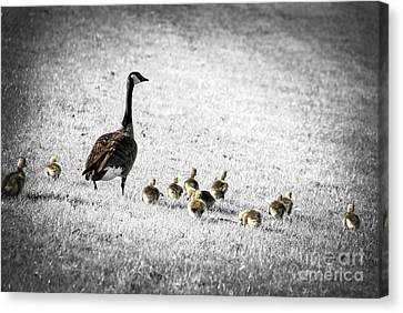 Mother Goose Canvas Print by Elena Elisseeva