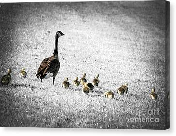 Mother Goose Canvas Print by Elena Elisseeva