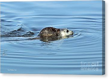 Canvas Print featuring the photograph Mother Harbor Seal And Pup by Susan Wiedmann