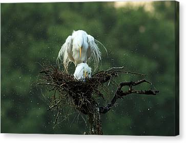 Wetland Canvas Print - Motherly Love by Libby Zhang