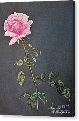 Mothers Rose Canvas Print by Nina Ficur Feenan