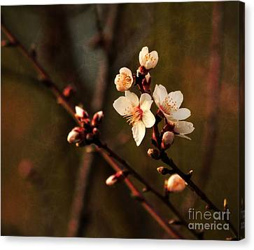 Canvas Print featuring the photograph Mother's Spring Blossoms by Marjorie Imbeau