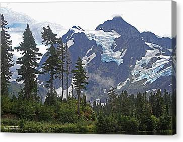 Canvas Print featuring the photograph Mount Baker And Fir Trees And Glaciers And Fog by Tom Janca