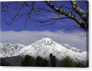 Mount Baldy Canvas Print by Camille Lopez