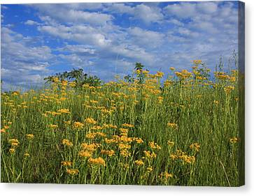 Canvas Print featuring the photograph Mount Cheaha Goldenrod-alabama by Mountains to the Sea Photo