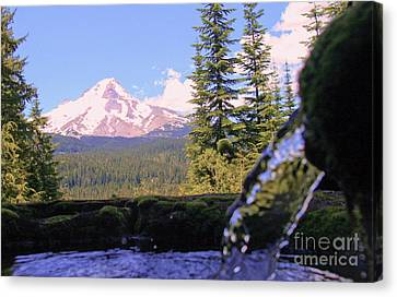 Mount Hood From Buzzard Point Canvas Print by Cari Gesch