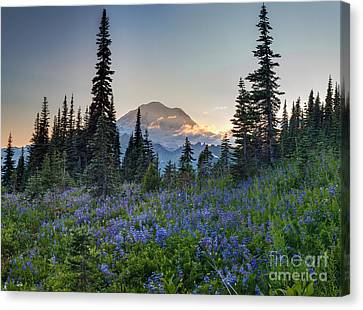 Mount Rainer Flower Fields Canvas Print by Mike Reid