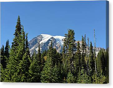 Canvas Print featuring the photograph Mount Rainier Evergreens by Anthony Baatz