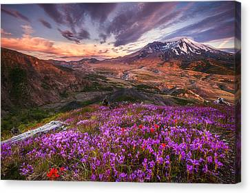 Darren Canvas Print - Mount St Helens Lives On by Darren  White