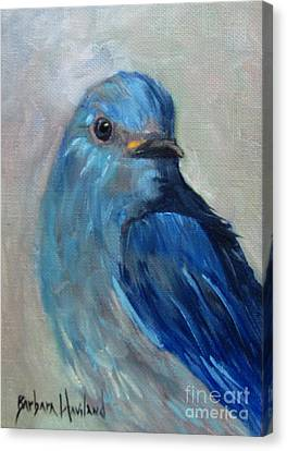Mountain Bluebird Canvas Print