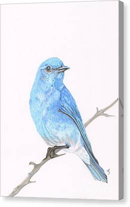 Mountain Bluebird Canvas Print by Yvonne Johnstone